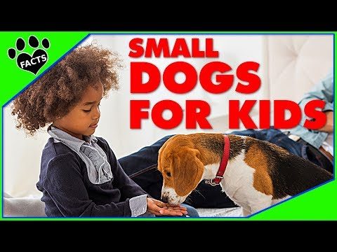 TopTenz: Best Small Dog Breeds for Kids Children Dogs 101 Animal Facts