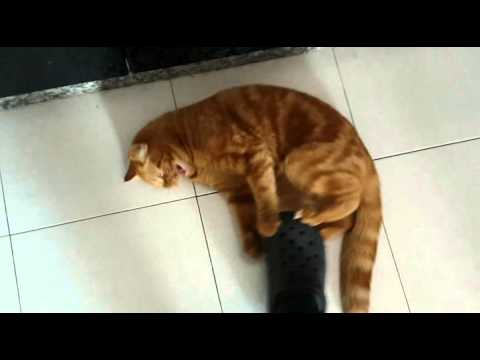 Keep your floor clean by wiping it with a cat....