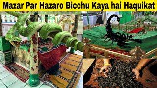 Bicchu Wale Baba ki Haquikat | A Mysterious Dargah in Uttar Pradesh at Amroha