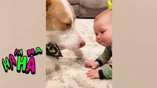 Hunde und Babys sind beste Freunde - Hunde Babysitting Babys