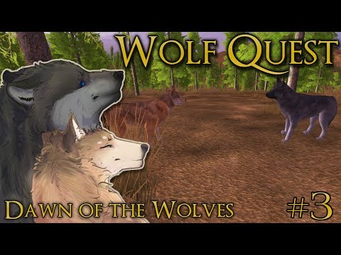 The Search for a Mate!! 🐺 WOLF QUEST: DAWN OF THE WOLVES 🐺 Episode #3