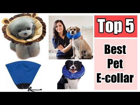 The Top 5 Best Pet E collar Reviews