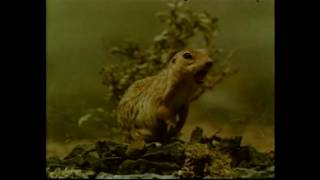 Le Isole degli Animali - Taccuino di Viaggio Doc by Film&Clips