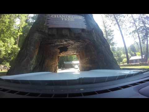 American Road Trip 2017 - Part 5: Yosemite & Redwood National Parks