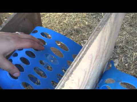 Create nets boxes that eliminate egg eating in chickens