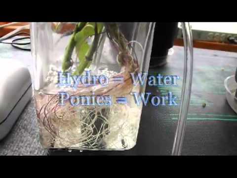 Hydroponics Defined
