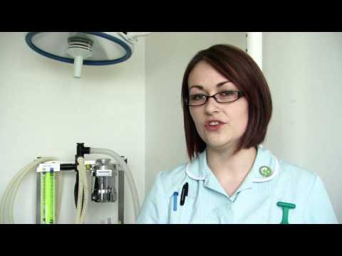 Study a Veterinary Nursing Apprenticeship at Duchy College