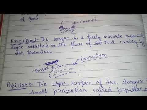 Ss.frenulum in hindi
