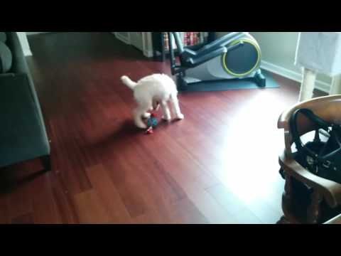 Puppy On Benadryl