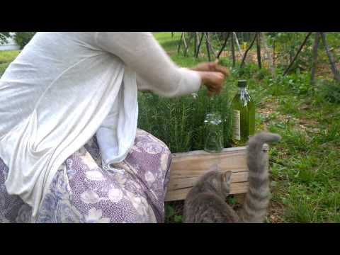How to easily make Rosemary essential oil :  Ghetto muslim house wife