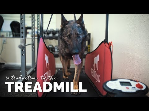 Introducing Your Dog to the Treadmill