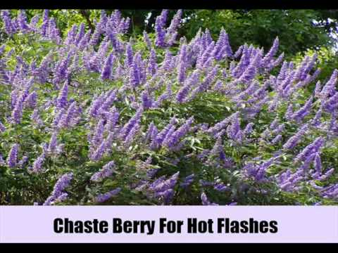 7 Herbal Remedies For Hot Flashes