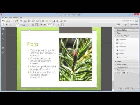 Adobe Acrobat XI Tutorial | Adding Buttons To PDFs