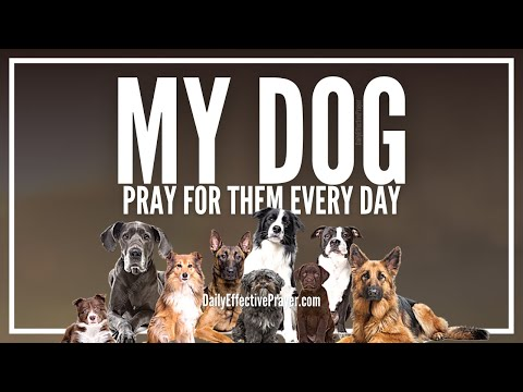 Prayer For My Dog - Prayer For Dogs Healing, Well Being (Cancer, Sickness, Etc)