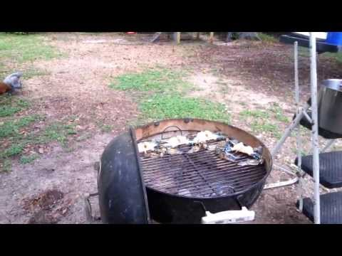 Redneck Cooking with Ed, Grilled Florida Blue Crabs