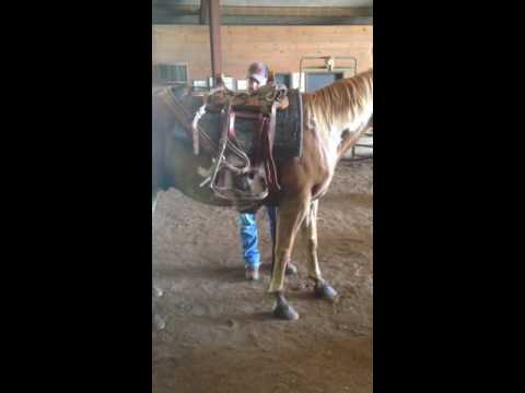 Putting Pack Saddle On for the First time