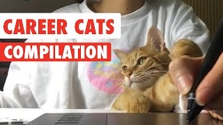 Career Cats Video Compilation 2017