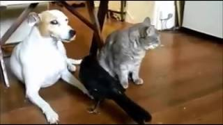 ALLAH KI QUDRAT ON ANIMALS