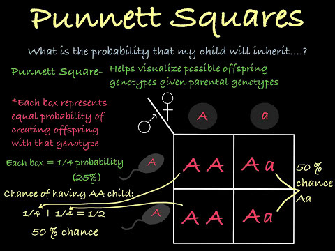 How to Use Punnett Squares