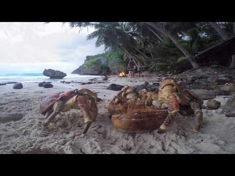 Our Island Life.. Christmas Island