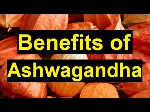 Top 10 Benefits of Ashwagandha | Health Benefits of Ashwagandha | Indian Ginseng