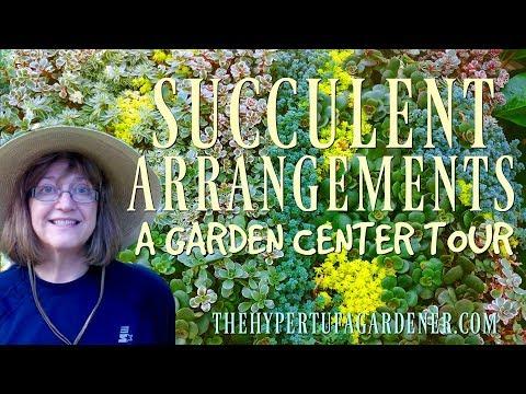 Succulent Arrangements - A Garden Center Tour