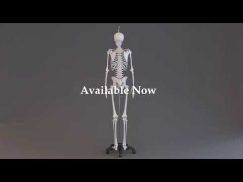 Complete Rigged 3D Model [hands, feet, muscles, skeleton, skin ...