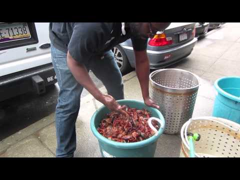 04/06/13 - Rinsing and Cleaning Live Crawfish / Crayfish