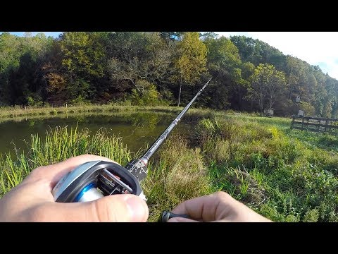 Fall Pond Bass Fishing with a Chatterbait, Spinnerbait, and Senko