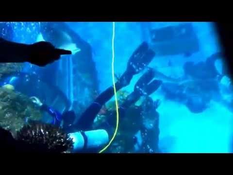Legoland sea life aquarium San Diego C.A.