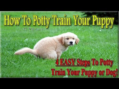 +++ How To Potty Train a Puppy  ♥ 4 EASY STEPS ♥ How to House Train Your Dog :))))
