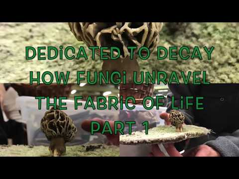 Dedicated to Decay: How Fungi Unravel the Fabric of Life Part 1 Mycology at its Finest!