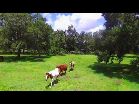 Flying the Phantom 3 Drone over horse pasture