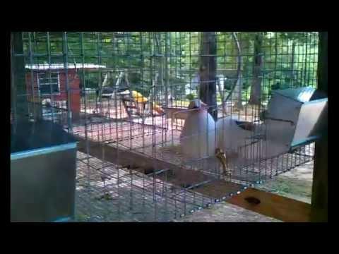 Rabbit watering system update