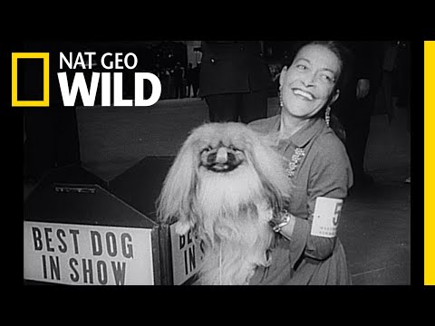 A Brief History of Dogs | Nat Geo Wild