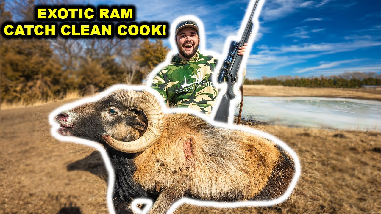 SPOT and STALK Exotic RAM Catch Clean Cook!!!