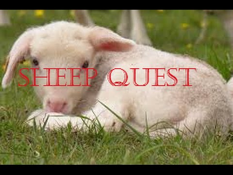 Minecraft Sheep Quest pt 1 SHAMOCK STOP RUNNING