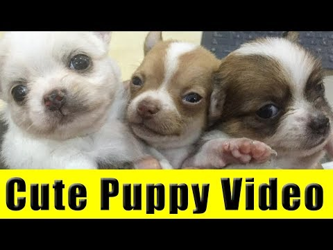 Cute Puppy Dog Video - My 3 New Puppy Dogs