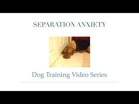 How to Remedy Separation Anxiety in Dogs