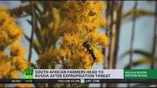 'Give me Siberian winter over Kalahari Desert summer': South African farmers head to Russia