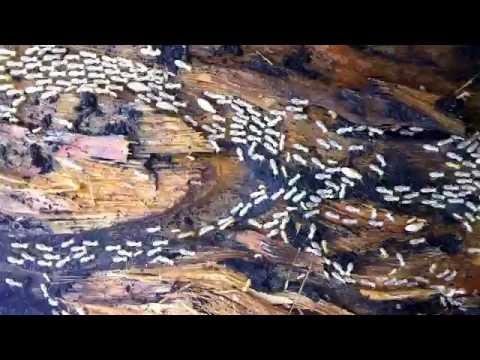 Pestworks Termite Control