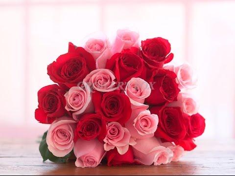bulk+roses -  bulk roses canada