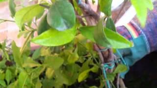Allestire fioriera con piante rampicanti miste