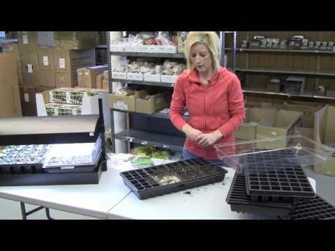 Starting Geranium Seeds Indoors - Growing Guide