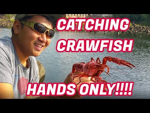 Catch Crawfish Using Your HANDS!!!