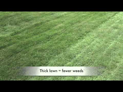 Green for Life -  Denis on over seeding for a thick lawn