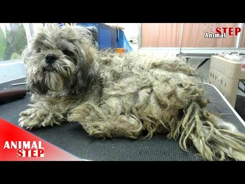 Stray Dog was so Matted Getting Beauty Transformation