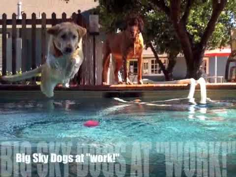 Dog Walking & Pet Sitting with Big Sky Dogs