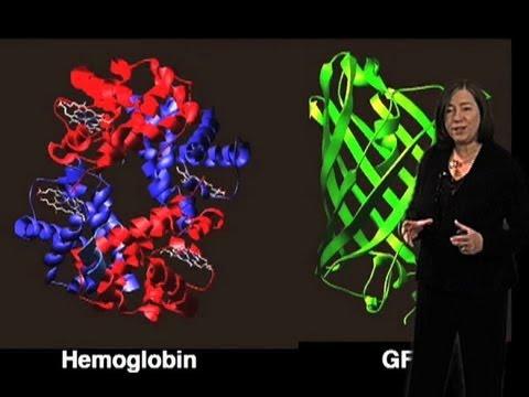 Prion Disease - Susan Lindquist (MIT/HHMI)