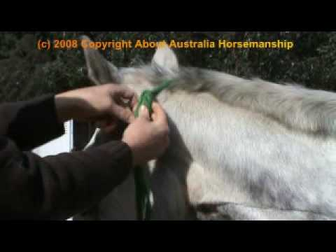 Horse Training - Tying a Rope Halter